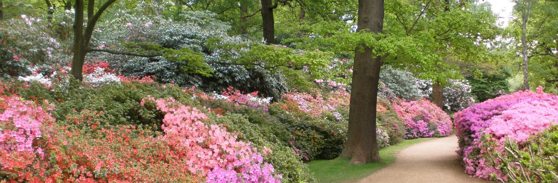 One of the widest ranges of Rhododendrons and Azaleas in the World