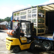 Despatch of large orders in cages