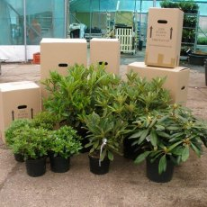 Despatch. All sorts of boxes for all sorts of plants.