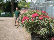 Colourful specimen sized plants