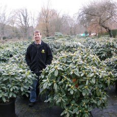 Specimen plants up to 120cm in size