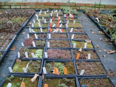 seedlings ready for pricking out