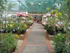 Our colourful plant centre